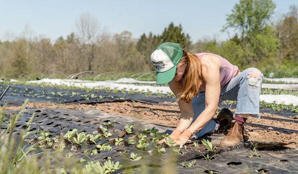 Post Image How Gardening Can Reduce Stress Boosts immune system - How Gardening Can Reduce Stress