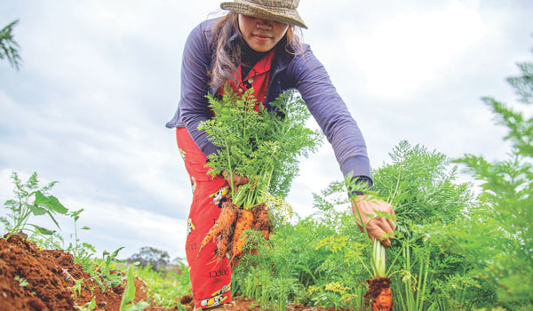 Post Image How Gardening Can Reduce Stress Eat fresh vegetables and fruits - How Gardening Can Reduce Stress
